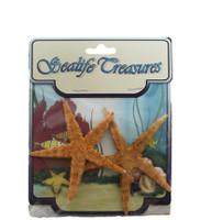 Philippines Starfish