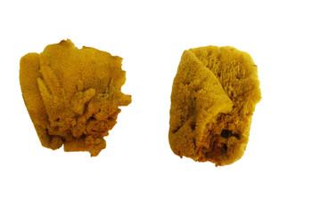 Assorted Sponge