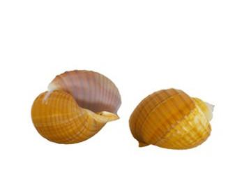 Tun Shell