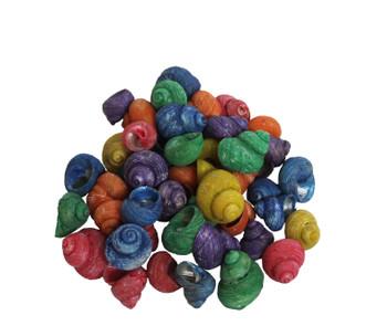 Dyed Turbo Seashells