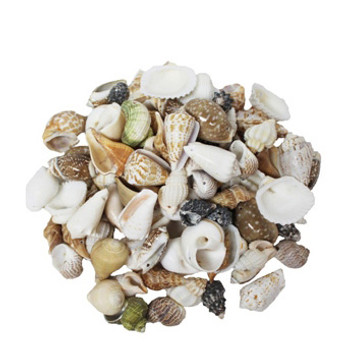 Medium Drilled Seashell Mix