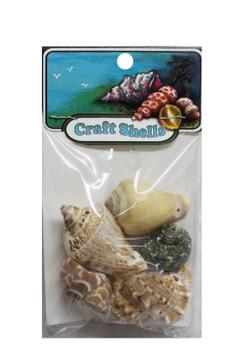 Medium Drilled Seashells With Header