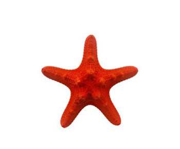 Dark Red Dyed Armoured Starfish
