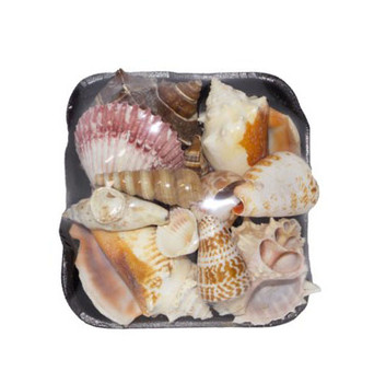 1-S Seashell Pack