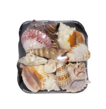 1-S Seashell Pack