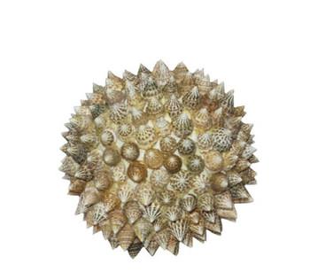 Natural Top Seashell Ball
