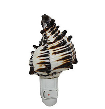 Black Murex Seashell Night Light