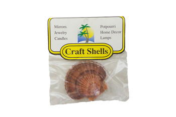 Mexican Flat Seashells W/Header
