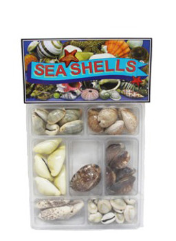 Cowrie Collection Seashells