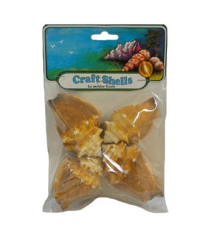 Fighting Conch Seashell - Craft Pack