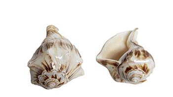 Polished Orange Whelk Seashell