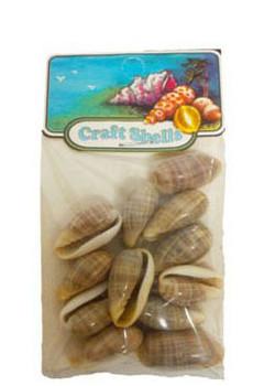 Marginella Angustata Seashell- Craft Pack