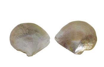 Mother of Pearl Seashell Plates