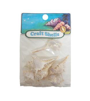 Murex Trappa  Seashell- Craft Pack