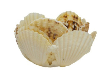Pecten Radula Basket  with Capiz Shell Base