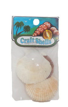 Pecten Tranquebaricus Seashell