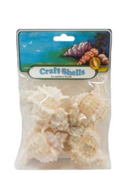 Pink Murex Seashell- Craft Pack