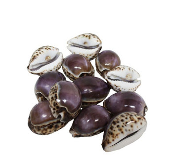 Purple Top Tiger Cowrie Seashell