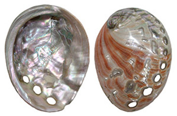 Polished Red Abalone-Small