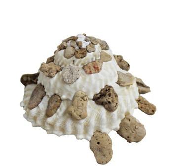 Xenophora Mekraninses Seashells