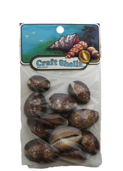 Snakehead Cowrie Seashells