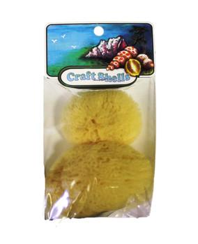 Sponge - Philippines