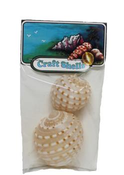Tonna Tessalata Seashells - 2 Piece Craft Pack