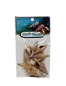 Turris Seashells