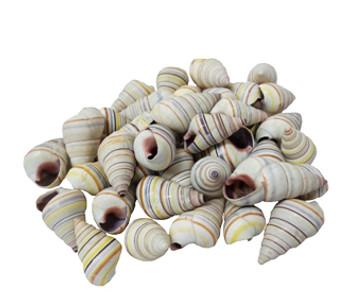 Tree Snail Seashells