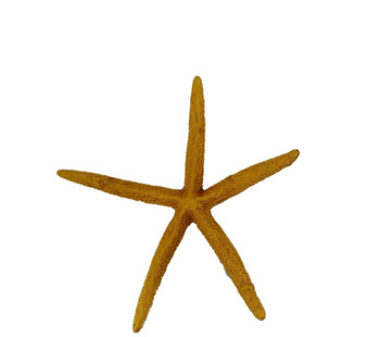 Painted Finger Starfish-Gold