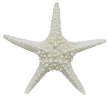 White Spiny Starfish