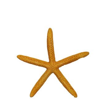 Dyed Orange Finger Star