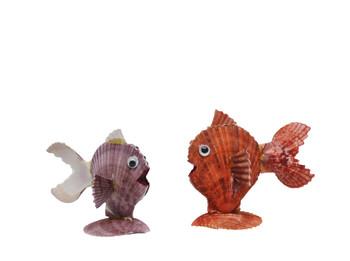 Pecten Noblis Fish