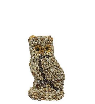 Owl Nassa