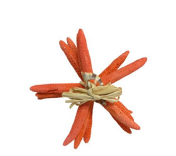 "Finger Starfish Bundle 6 - ""- Fire Red- Set of 4 W/Raffia & Slice Tie"