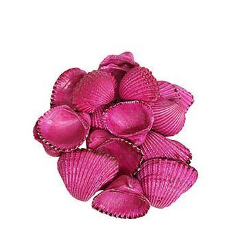 Dyed Pink Ark Seashells
