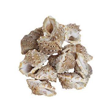 Bursa Crumena Seashells