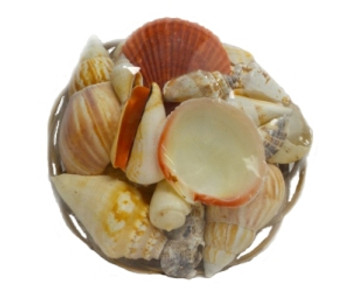 "6"" Midrib Basket Shell pack"