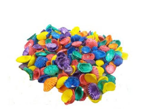 Dyed Baby Ark Seashells