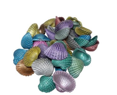 Dyed Baby Arks Seashells