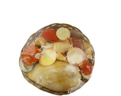Midrib Basket Seashells Pack