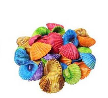 Dyed Ark Small Seashells