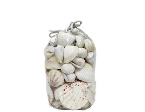 White Mix Seashells in Vinyl Bag