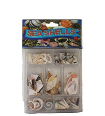 Slice Collection Seashells