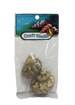 Turbo Seashells