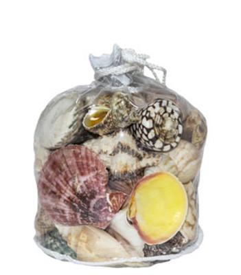 Designer Shell Gift Bag