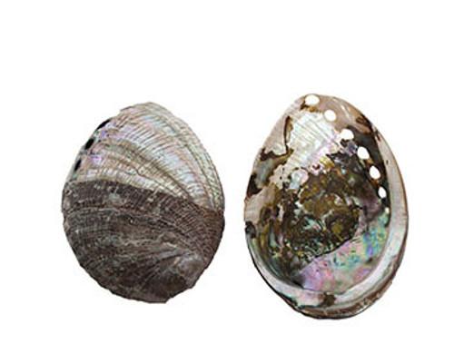 Blue Abalone- ½ Buffed & ½ Pearlized