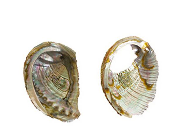 Broken Abalone Pieces-LB