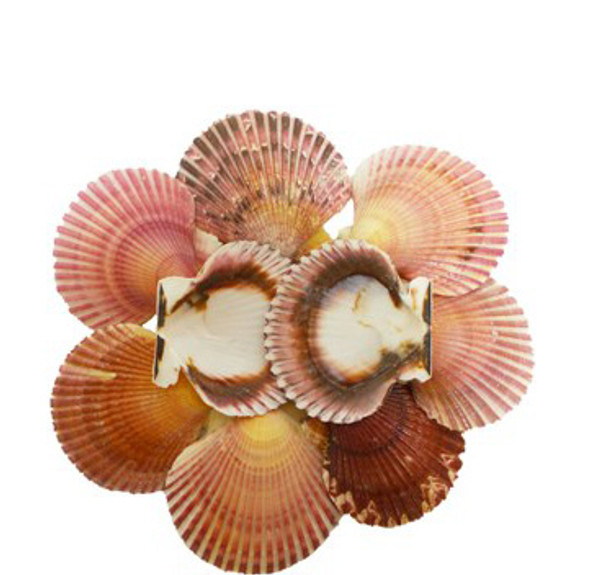 Pink Carribean Pecten Lacquered
