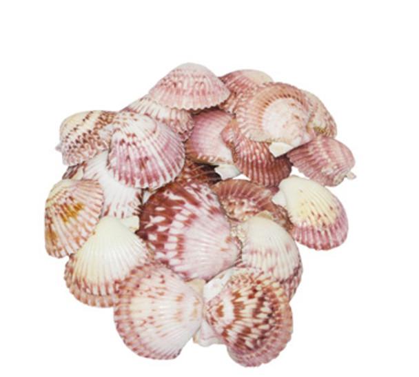 Pink Pecten Lacquered Seashells